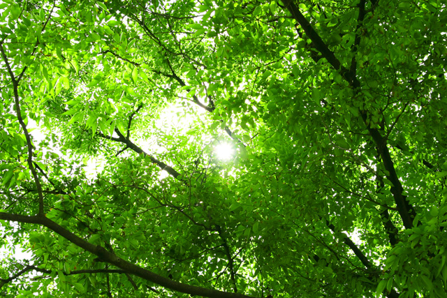 tree_woods_beiz_jp_S02456